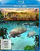 Abenteuer Everglades 3D - Die Manatis des Crystal River (Blu-ray 3D) Blu-ray