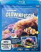 Clownfisch-Aquarium HD