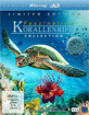 Faszination Korallenriff 3D - V...
