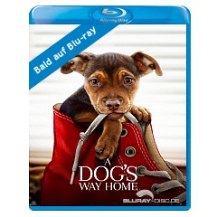 A Dogs Way Home Blu Ray Digital Copy Uk Import Ohne Dt