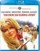 Far from the Madding Crowd (1967) - Warner Archive Collection (US Import ohne dt. Ton) Blu-ray