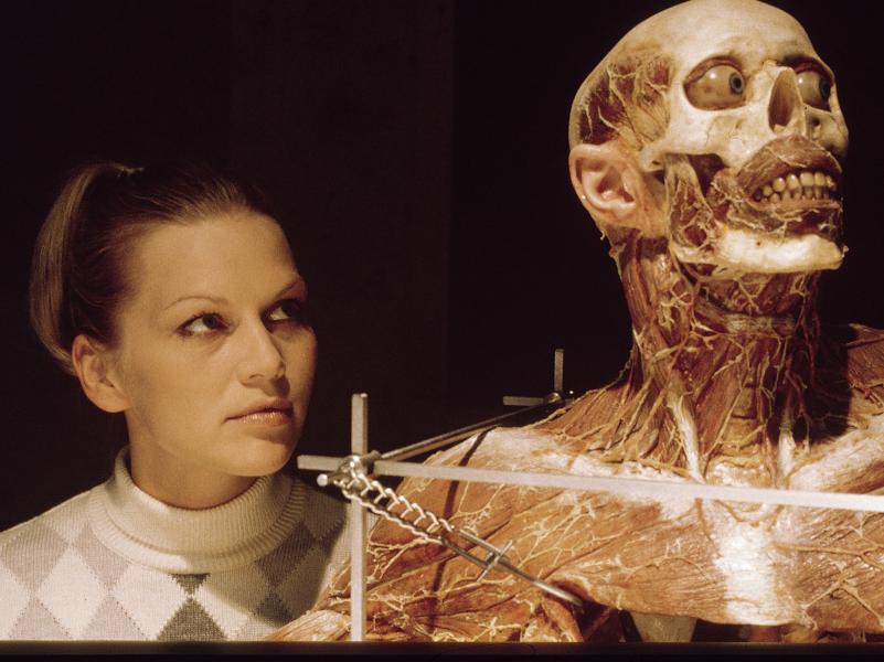 Anatomie-Reviewbild-06.jpg