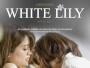 White-Lily-News.jpg